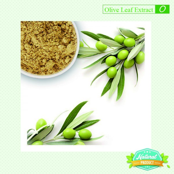 Olive Leaf Extract Oleuropein 40% 25kg/drum