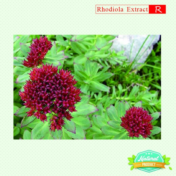 Rhodiola Rosea Extract Rosavins, Salidroside 12%, 5% 5kg/bag