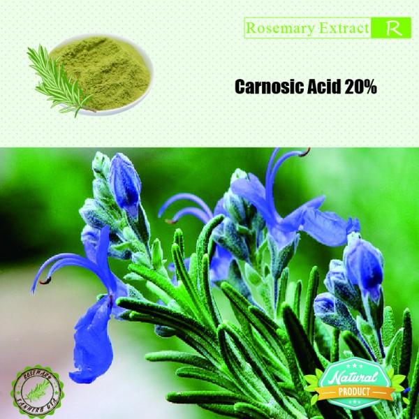 Rosemary Extract Carnosic Acid 20% 25kg/drum