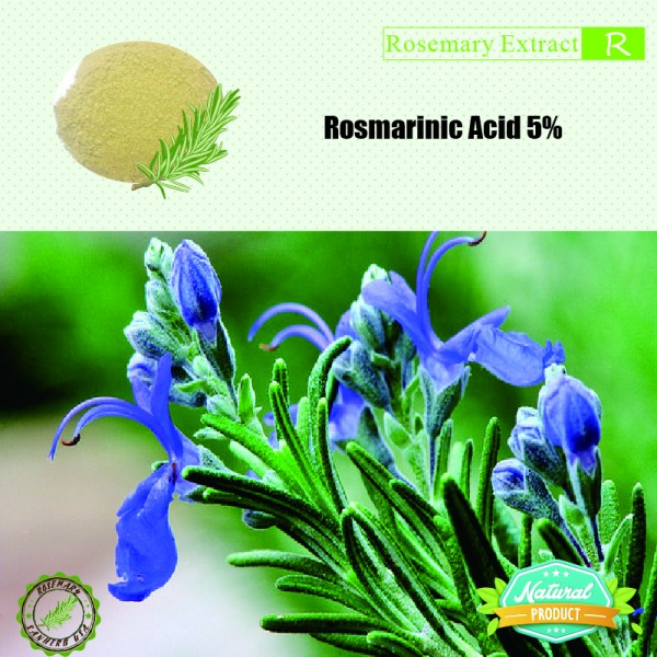 Rosemary Extract Rosmarinic Acid 5%  25kg/drum