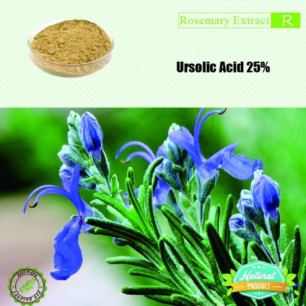 Rosemary Extract Ursolic Acid 25% 25kg/drum